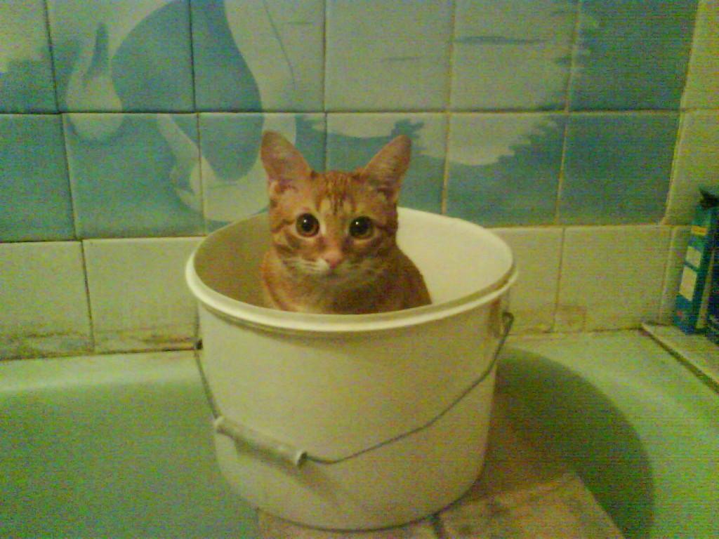 очаровательный рыжий котенок сидит в ведре
