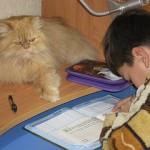 рыжий кот на столе