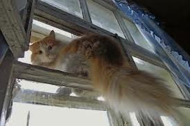 кот-рыжий-сидит-на-окне