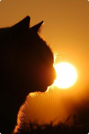 рыжий кот на солнце