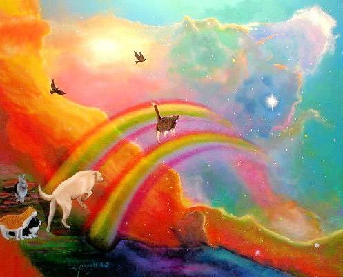 рай для котов и собак