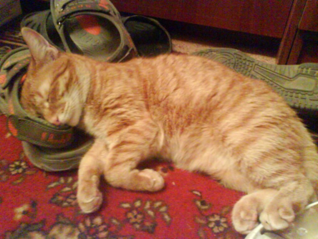 рыжий кот сладко спит