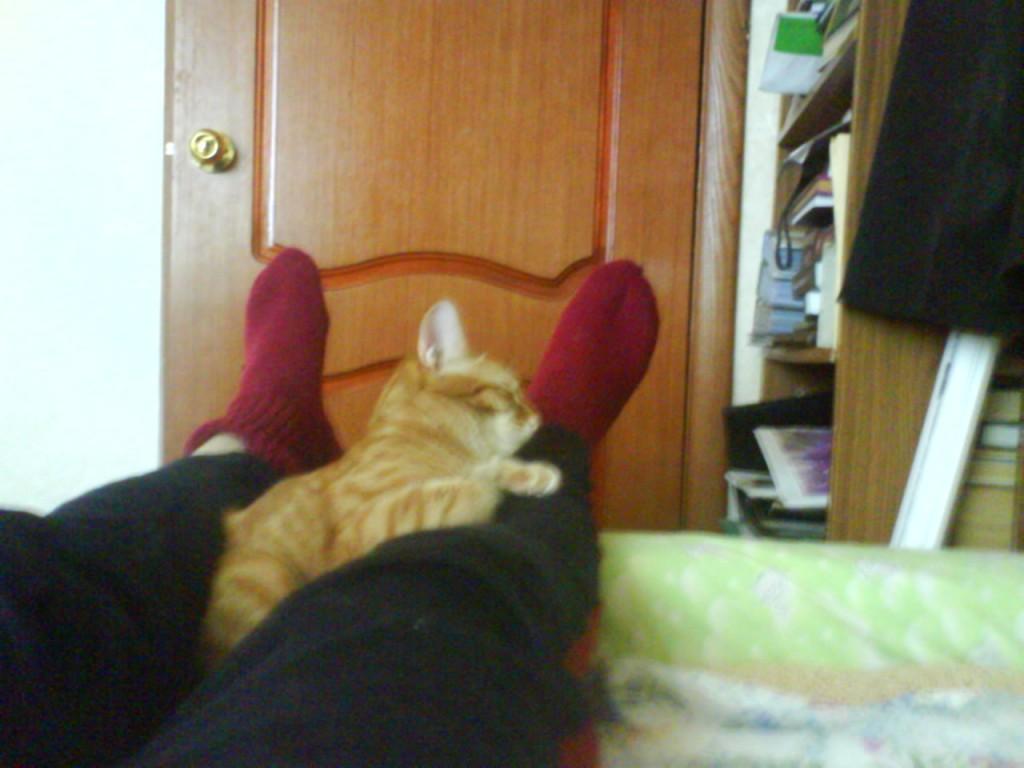 рыжий кот спит довольный