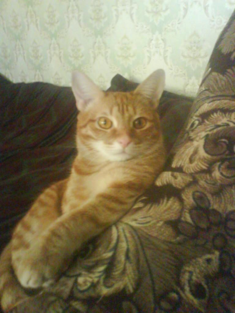 кот рыжий вальяжно сидит в кресле