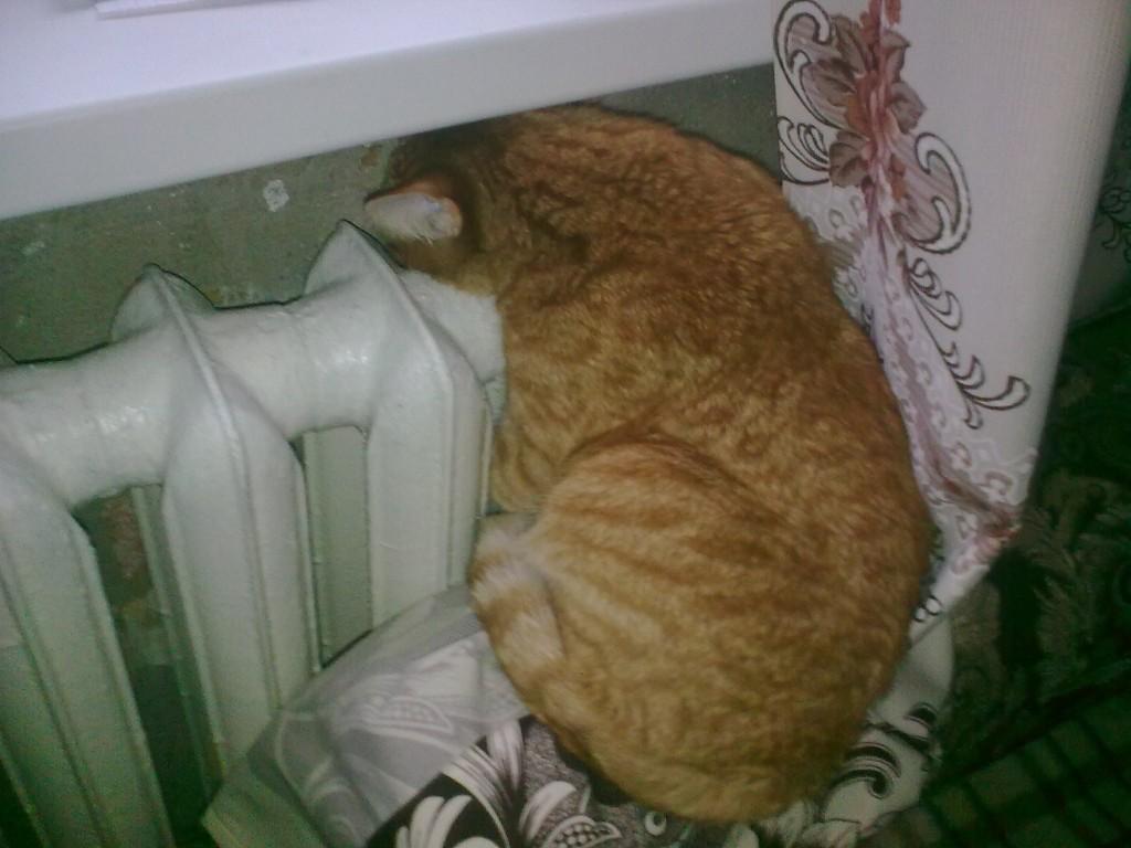 рыжий кот греется на батарее