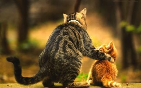 Как подружить кота и котёнка?