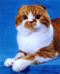 О чем расскажет рыжий окрас кота.