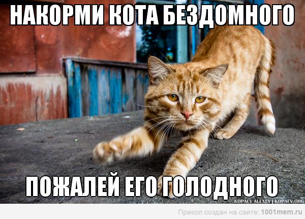 рыжий кот голодный бездомный накорми его мотиватор