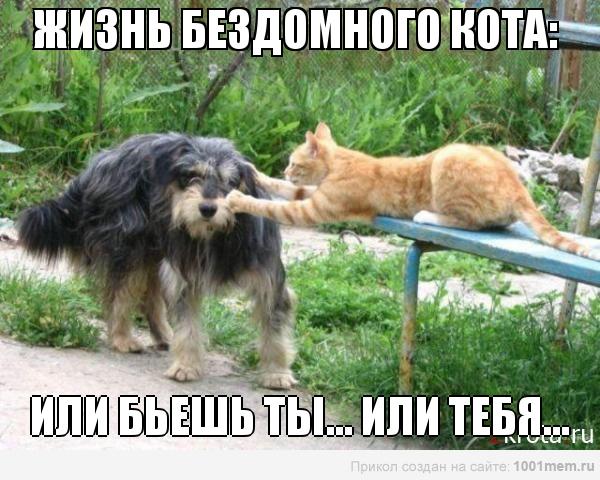 рыжий кот и собака драка