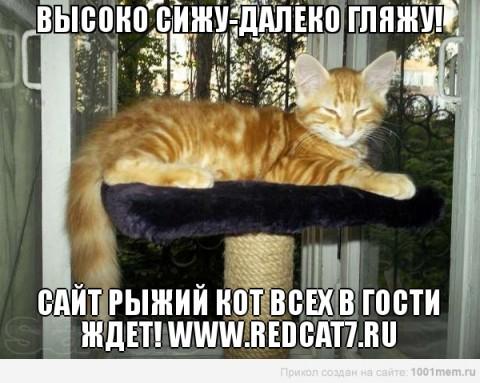 рыжий кот ангора сидит высоко красивый