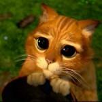 рыжий котик из шрека