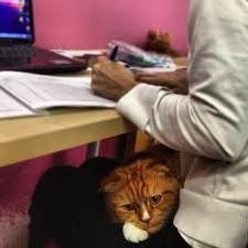 рыжий кот на коленях сидит