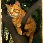 кошка рыжая на дереве сидит