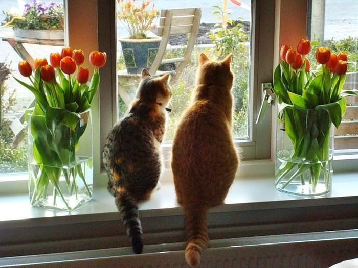 кот и кошка рыжие любовь