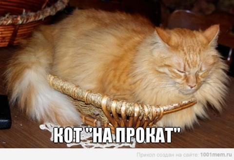кот на прокат рыжий ждет своего часа