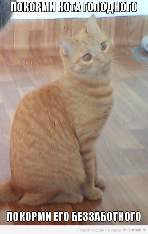 котик рыжий лукаво смотрит