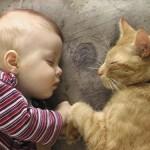 кот рыжий лечит ребенка