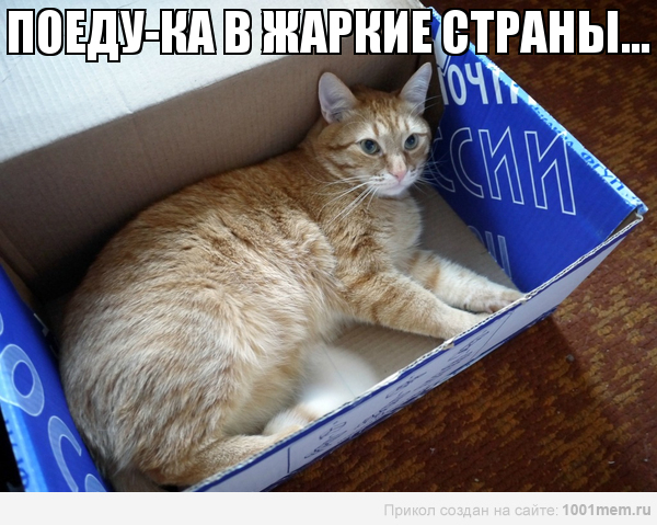 рыжий-кот-в -коробке-почтовой-поездка