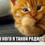 Кошки — генетическая загадка.