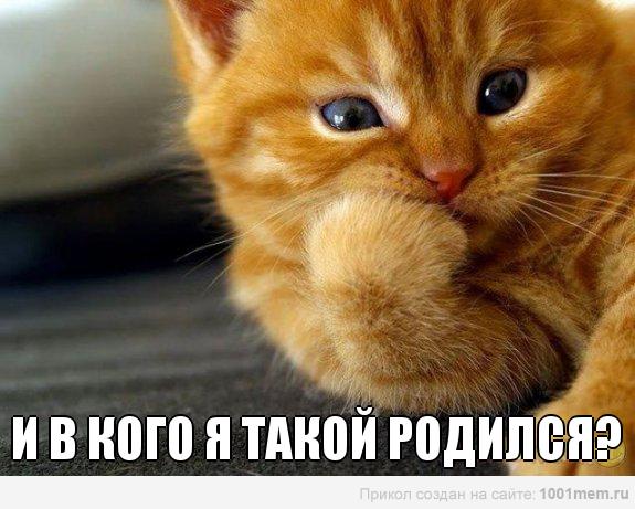 рыжий котенок думает о генетике