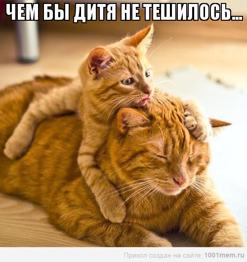 рыжий котенок на рыжей кошке играется