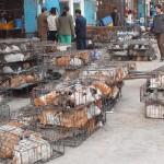 едят ли в китае кошек