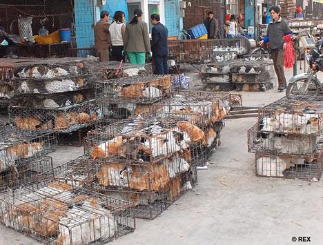 К китае едят котов