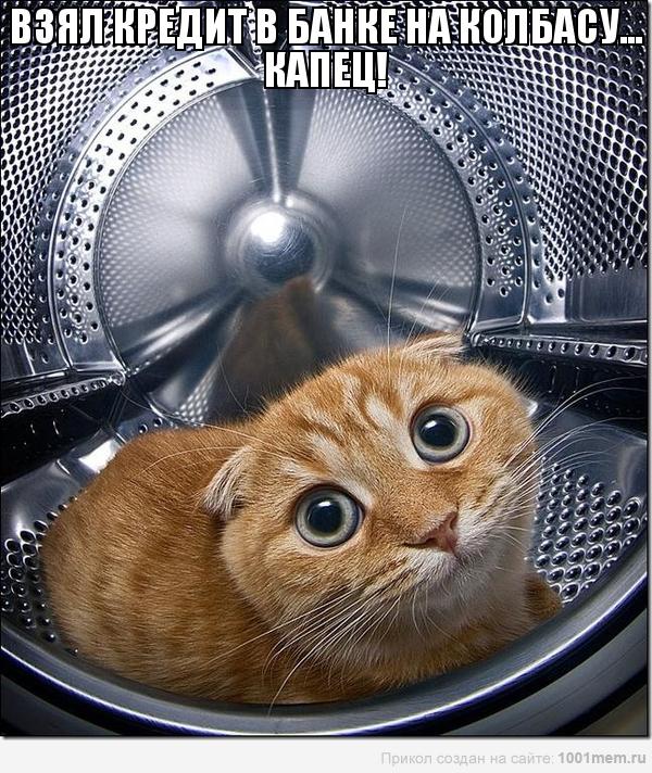 рыжий кот в стиральной машине мотиватор