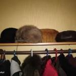 рыжий кот спряталася среди шапок забавно