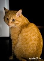 Озорной рыжий кот Солнышко!