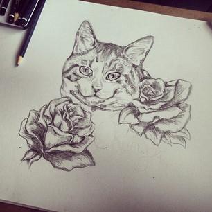картинка рыжая кошка рисунок кошки и роза