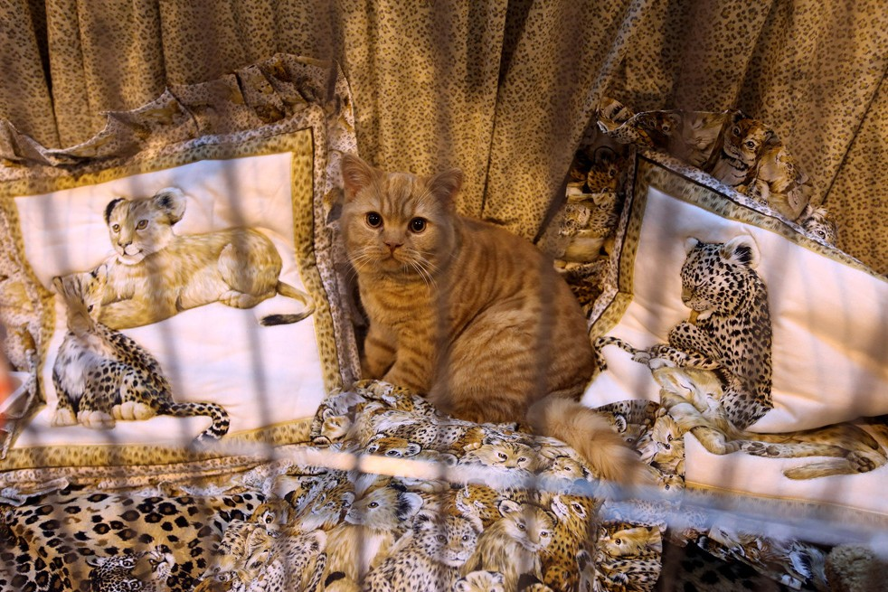 Кошки в истории Англии.