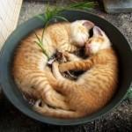 рыжие котята спят мило