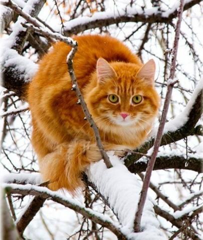 рыжий кот на дереве сидит красивый