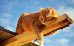 рыжий-кот-лежит-красивый