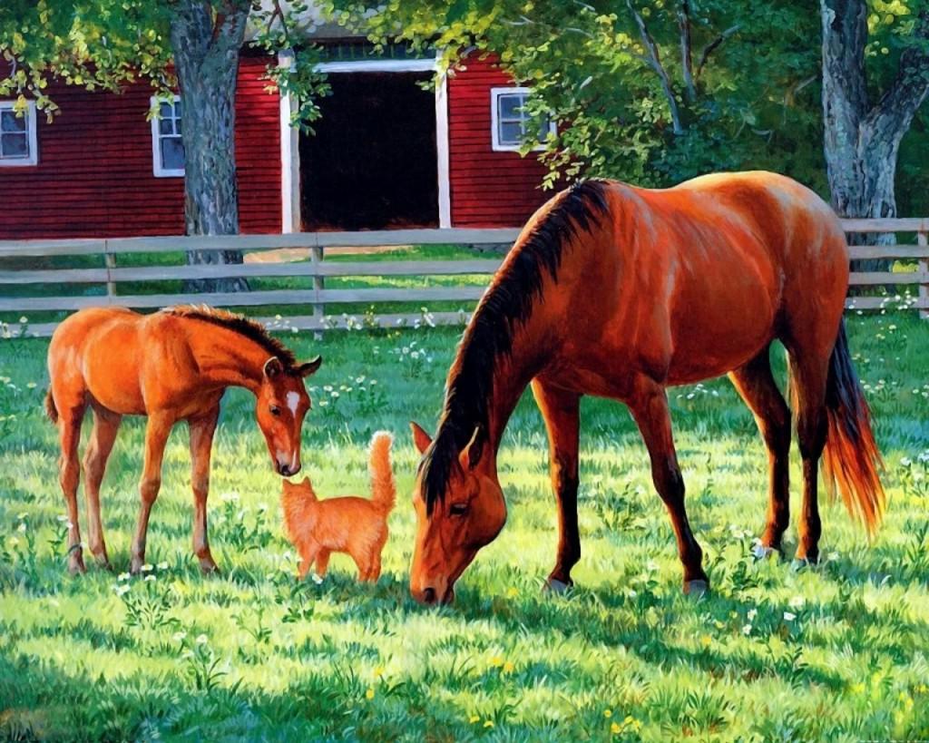 кот-рыжий-лошади-красивые