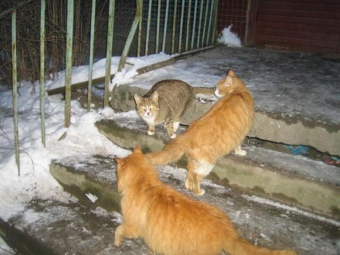 бездомные-котики