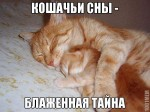 Кошачьи сны, о чем они бывают?