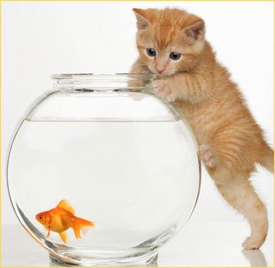 кошка-и-рыбка
