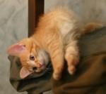 Что сниться кошкам?