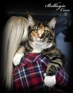 История кошек в России. Какая она?
