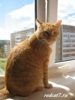Рыжая кошка мечтает о голубятинке, а вы?