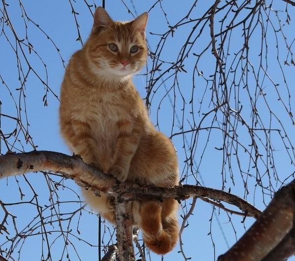 рыжий-кот-на-дереве