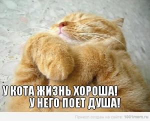 рыжий кот счастливый лежит
