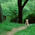 рыжий-котенок-в-лесу