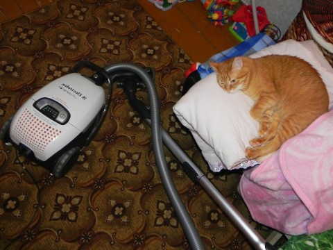 кот рыжий и пылесос