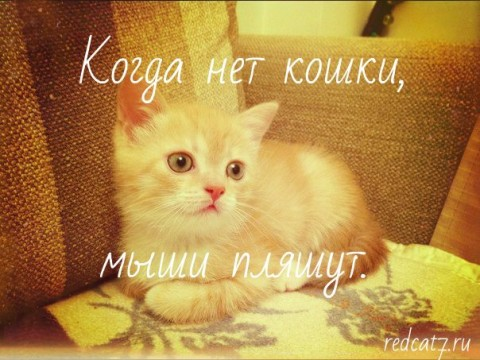 кот рыжий милый