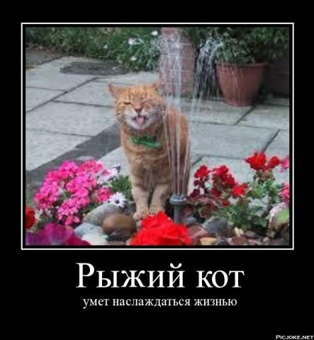 кот рыжий наслаждается мотиватор