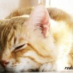 кот-рыжий-красавчик-спит-дома-уютно