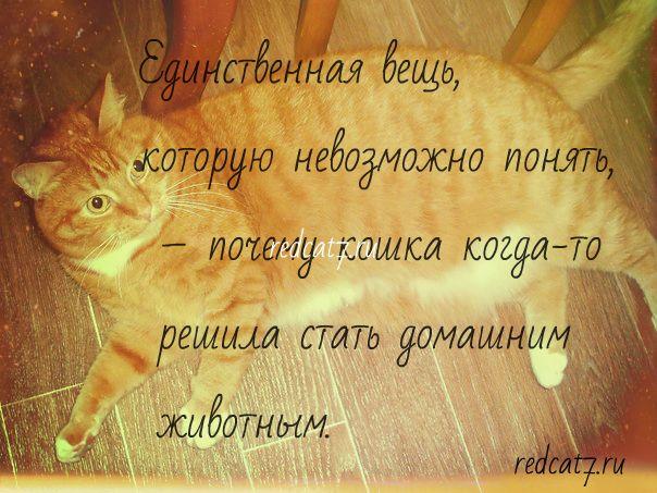 мотиватор про рыжего кота